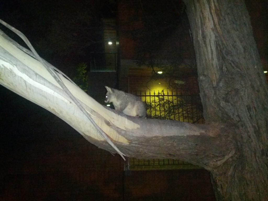 Native Australian night life!