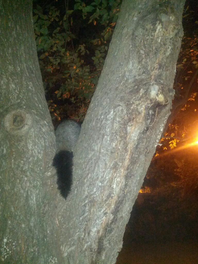 Spot the possum!